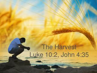 The Harvest Luke 10:2, John 4:35