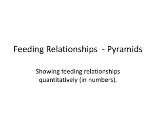 Feeding Relationships  - Pyramids