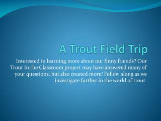 A Trout Field Trip