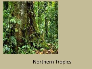 Northern Tropics