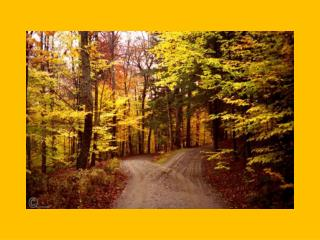 Two roads diverged in a yellow wood,           And sorry I could not travel both
