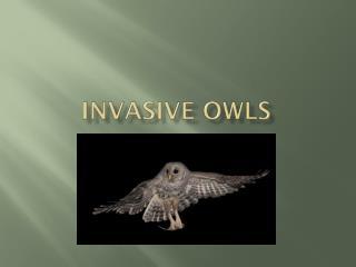Invasive owls