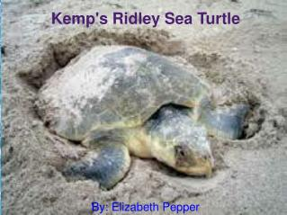 Kemp's Ridley Sea Turtle By: Elizabeth Pepper
