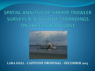 SPATIAL ANALYSIS OF SHRIMP TRAWLER SURVEYS & SEA TURTLE STRANDINGS ON THE GEORGIA COAST