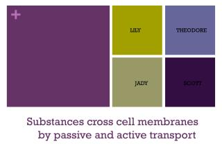 Substances cross cell membranes             by passive and active transport