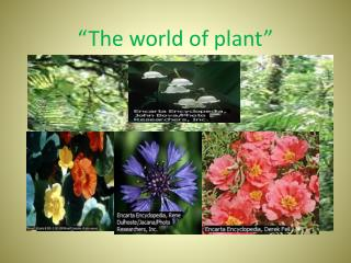 """The world of plant"""