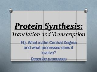 Protein Synthesis: Translation and Transcription