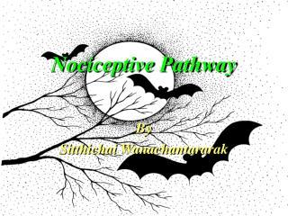 Nociceptive Pathway