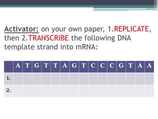 Protein Synthesis Review