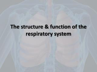 The structure & function of the respiratory system