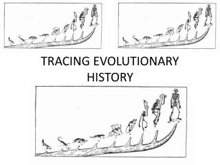 TRACING EVOLUTIONARY HISTORY