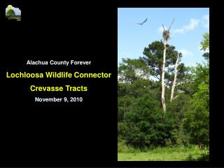 Alachua County Forever Lochloosa Wildlife Connector  Crevasse Tracts November 9, 2010