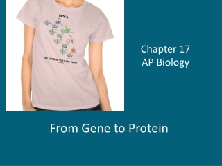 Proteins  Chapter 17