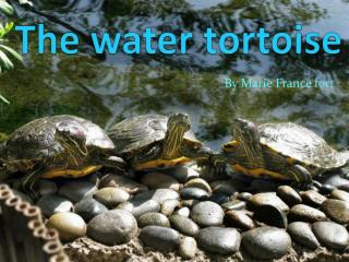 The water tortoise