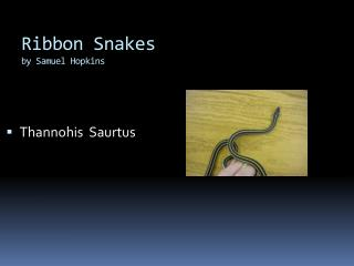 Ribbon Snakes by Samuel Hopkins