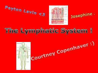 The Lymphatic System !