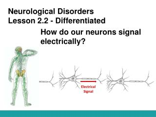 Neurological Disorders Lesson 2.2 - Differentiated