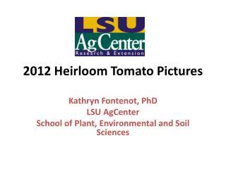 2012 Heirloom Tomato Pictures