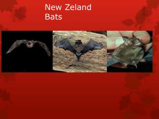 New Zeland Bats