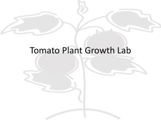 Tomato Plant Growth Lab