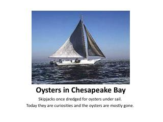 Oysters in Chesapeake Bay