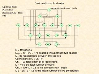 Basic  metrics  of  food webs