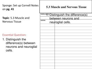 Sponge: Set up Cornell Notes on  pg. 41 Topic : 5.3 Muscle and Nervous Tissue Essential Question :