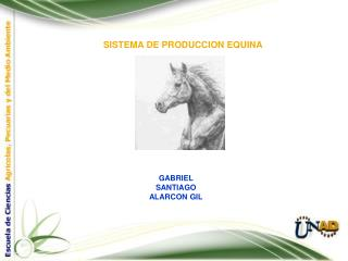 SISTEMA DE PRODUCCION EQUINA