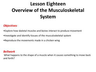 Lesson Eighteen Overview of the Musculoskeletal System