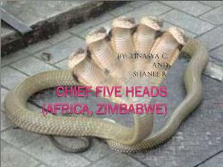 Chief five heads ( A frica,  Z imbabwe)