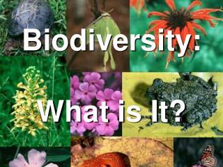 Biodiversity:  What is It?