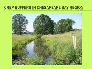 CREP BUFFERS IN  Chesapeake Bay Region