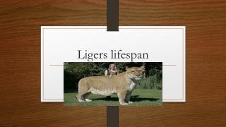 Ligers lifespan