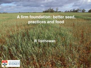 A firm foundation: better seed, practices and food