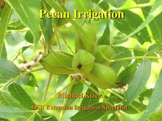 Pecan Irrigation