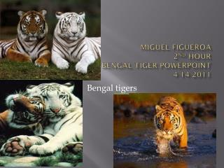 Miguel Figueroa 2 nd  hour Bengal tiger PowerPoint 4-14-2011