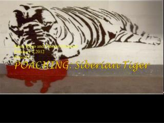 POACHING: Siberian Tiger