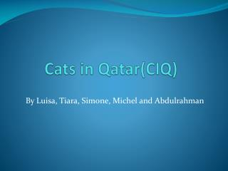Cats in Qatar(CIQ)