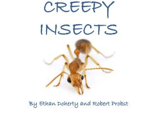 CREEPY  INSECTS