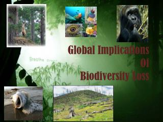 Global Implications  Of  Biodiversity Loss