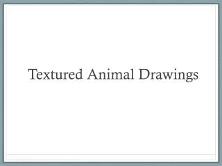 Textured Animal Drawings