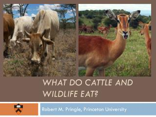 What Do cattle and wildlife eat?