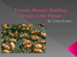 Termite Mound: Building Design of the Future