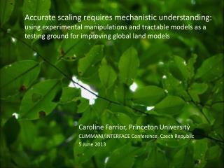 Caroline Farrior, Princeton University CLIMMANI/INTERFACE Conference, Czech Republic 5 June 2013