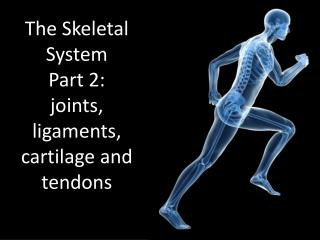 The Skeletal  System Part 2:  joints, ligaments, cartilage and tendons