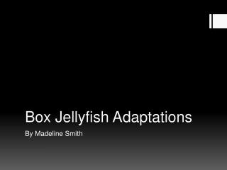 Box Jellyfish Adaptations