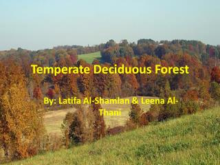 Temperate Deciduous  F orest