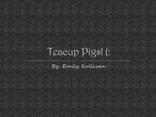 Teacup Pigs! (: