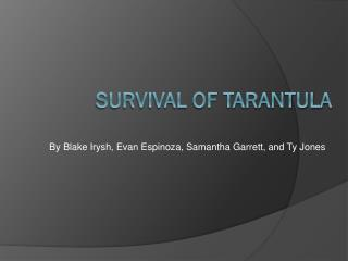 Survival of tarantula
