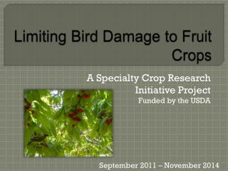 Limiting Bird Damage to Fruit Crops